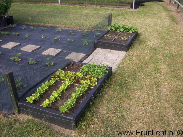 Vierkantemetertuin FruitLent