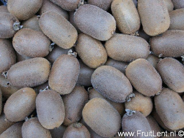 kiwi opbrengst FruitLent