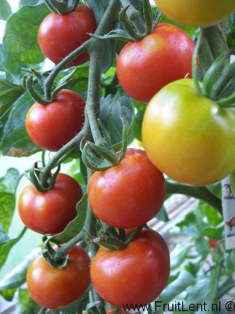 gardeners_delight1