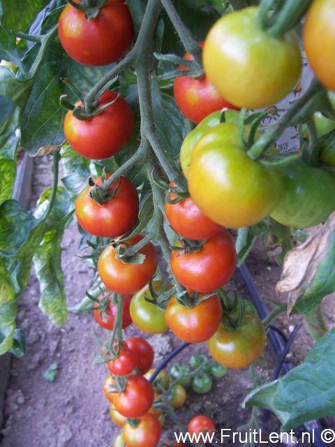 gardeners_delight2