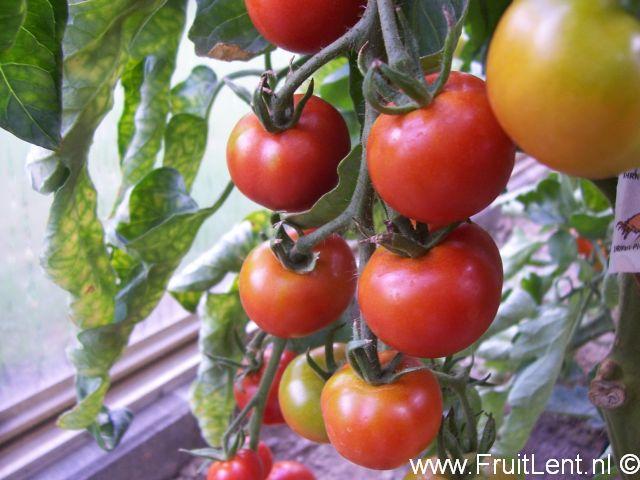 gardeners_delight3