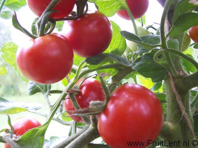 gardeners_delight4