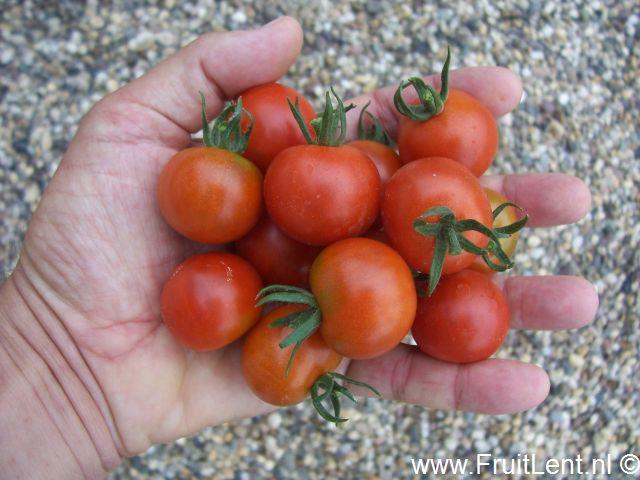 gardeners_delight6