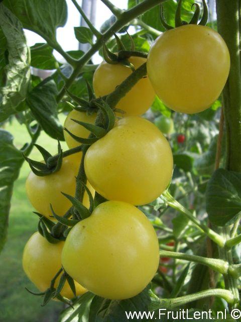 lemon_cherry
