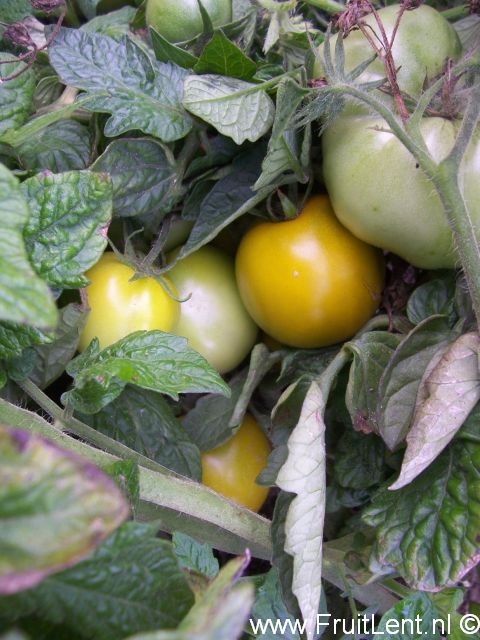 lime_green_salad3