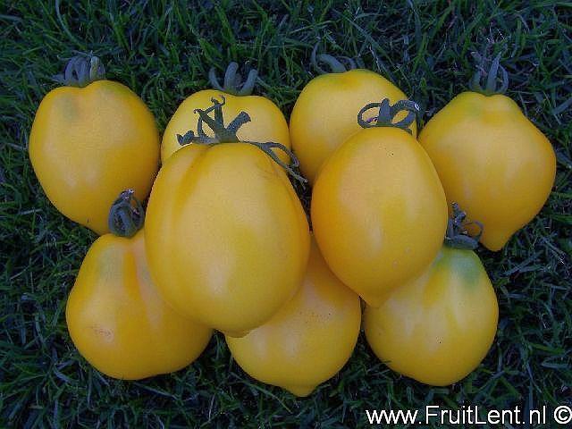 plum_lemon2