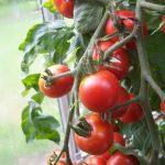 gardeners_delight5