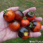indigo_cherry_drops4